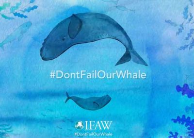 Ifaw, International Fund for Animal Welfare. Water color animation
